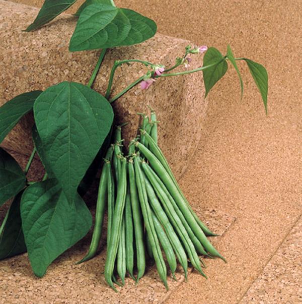 ファミリーテンダー(いんげん豆)